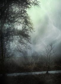 Nebel, Landschaft, Winter, Baum