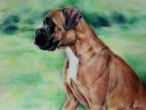 Hundeportrait, Hundezeichnung, Boxer, Zeichnungen
