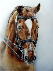 Dressurpferd, Pferdemalerei, Zeichnungen,