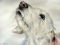Canispro, Hundeportrait, Hundeaquarell, Hund