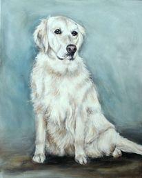 Golden retriever, Gemalter hund, Hundeportrait, Hund