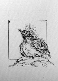 Vogel, Jungvogel, Tuschezeichnung, Zeichnungen
