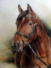 Pferdezeichnung, Pferde, Pferdeportrait, Zeichnungen