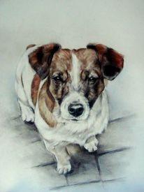 Terrier, Hundeportrait, Hundezeichnung, Zeichnungen