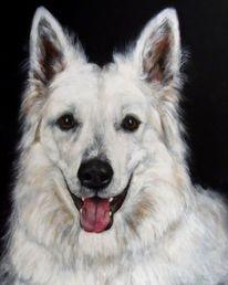 Hundeportrait, Malerei, Schäferhund,