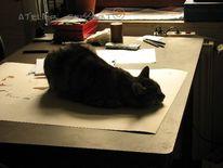 Atelier, Kater, Zeichnung, Felidae