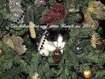 Fest, Katze, Tannenbaum, Weihnachten