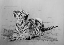 Tiger, Großkatze, Zoo, Zeichnung