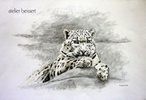 Schneeleopard, Zoo, Raubtier, Tiere
