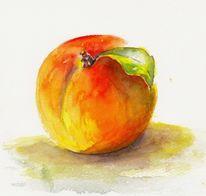 Aquarellmalerei, Früchte, Pfirsich, Aquarell