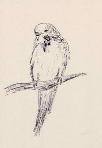 Sittich, Zeichnung, Tuschmalerei, Zeichnungen