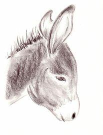 Esel, Zeichnungen