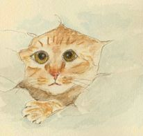 Aquarellmalerei, Tiere, Katze, Neugier