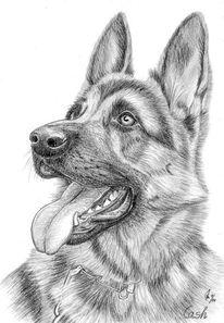 Hund, Bleistiftzeichnung, Tiere, Portrait
