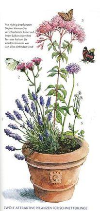 Aquarell pflanzen, Illustrationen, 2013, Zeitschrift