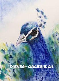 Pfau, Vogel, Aquarellmalerei, Tierportrait