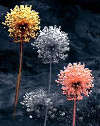 Pflanzen, Knoblauch, Digitale kunst