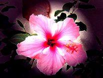 Hibiskus, Pflanzen, Digitale kunst