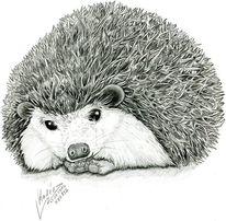 Tiere, Zeichnung, Illustration, Illustrationen