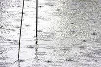 Binsen, Regen, See, Zen