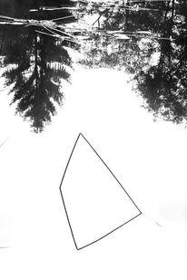 Binsen, See, Wald, Fotografie