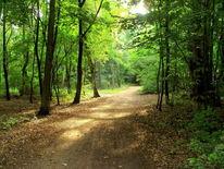 Waldweg, Wald, Sommer nachmittag, Digitale kunst