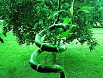 Bambus, Lucky bamboo, Glücksbambus, Outsider art
