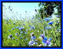 Blau, Bearbeiteten, Feld, Kornblumen