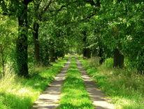 Baum, Wald, Nachmittag, Eihe