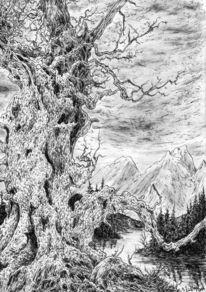 Märchenwald, Berge, Blätter, Blick