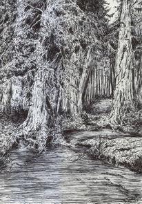 Landschaft, Wald, Wasser, Dunkel