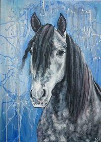 Pferde, Apfelschimmel, Pferdekopf, Blau