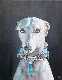 Whippet, Hund, Windhund, Halsband