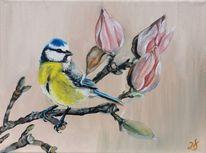 Blaumeise, Magnolien, Frühling, Vogel