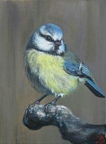 Äste, Vogel, Blaumeise, Malerei