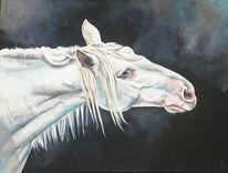 Pferde, Portrait, Weiß, Schimmel
