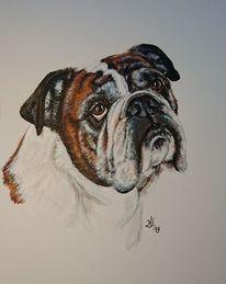 Portrait, Bulldogge, Hund, Malerei