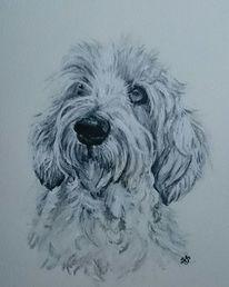 Hund, Hundekopf, Portrait, Schwarz weiß