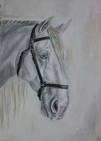 Augen, Pferde, Weiß, Pferdekopf