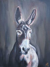 Esel, Portrait, Muli, Malerei