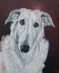 Windhund, Hund, Barsoi, Borzoi