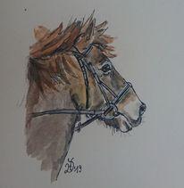 Pony, Pferde, Wasserfarbe, Isländer