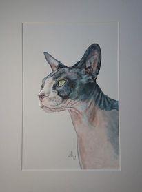Kater, Nacktkatze, Katze, Malerei