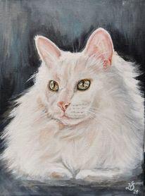 Katze, Kater, Perserkatze, Malerei