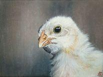 Hahn, Huhn, Hühnerküken, Küken