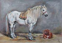 Bulldogge, Hund, Schimmel, Pferde