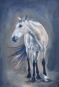Gaucho, Pferde, Criollo, Pony