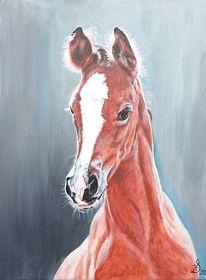 Pferde, Fohlen, Portrait, Malerei