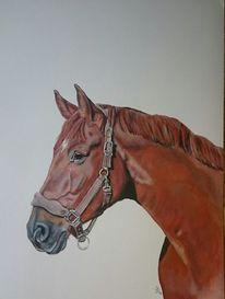 Pferdekopf, Portrait, Fuchs, Pferde
