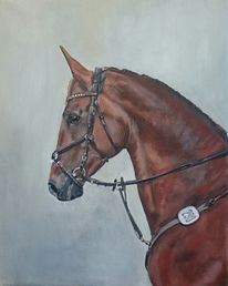 Pferde, Portrait, Pferdekopf, Springpferd